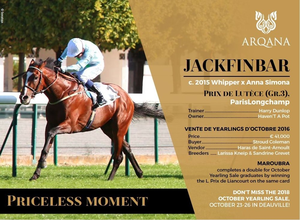 Join Harry at Arqana October sale where he will be looking for another Jackfinbar!