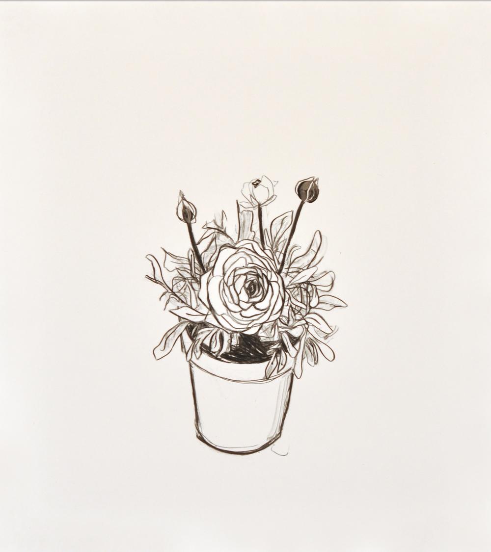 Ranunculus 7