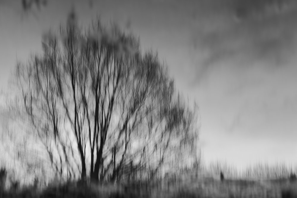 Woodland in Hamburg   |   04/2016   |   Print-ID 067   |   30 x 45 cm