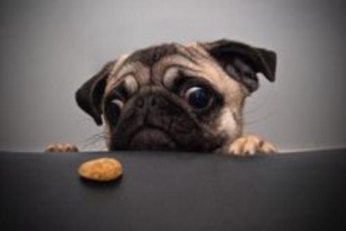 DogFocus.jpg