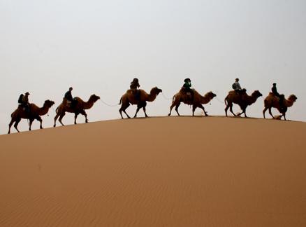 CamelTrain.jpg