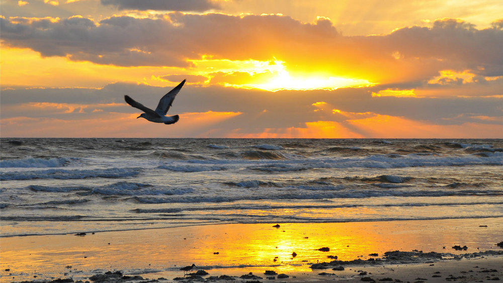 BeachSunrise.jpg