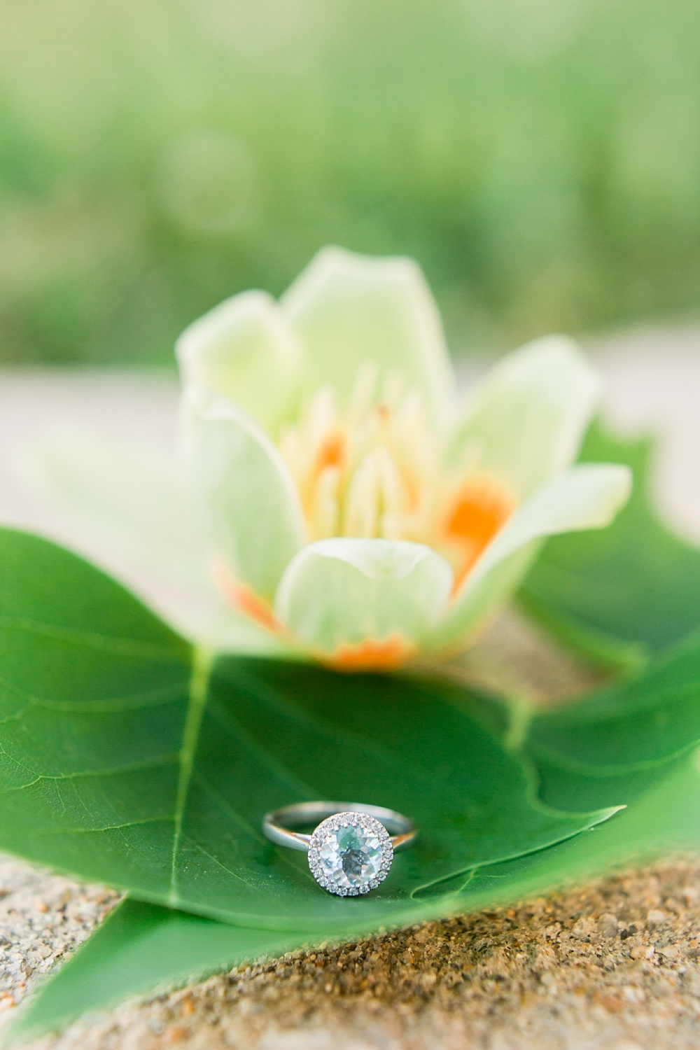 engagement ring rests on a tree bloom