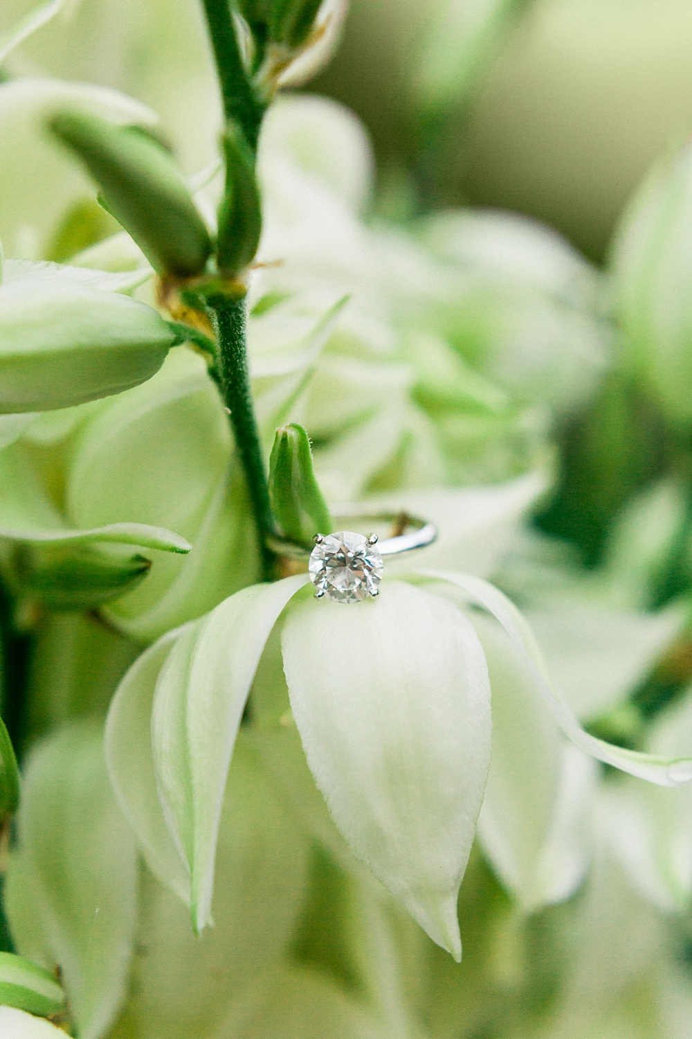 solitaire engagement ring rests on a soaptree yucca bloom