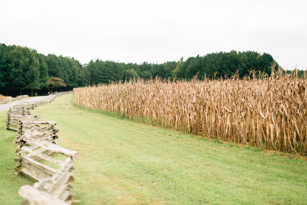 Corn field at wedding venue Shady Wagon Farm in New Hill NC near Raleigh NC
