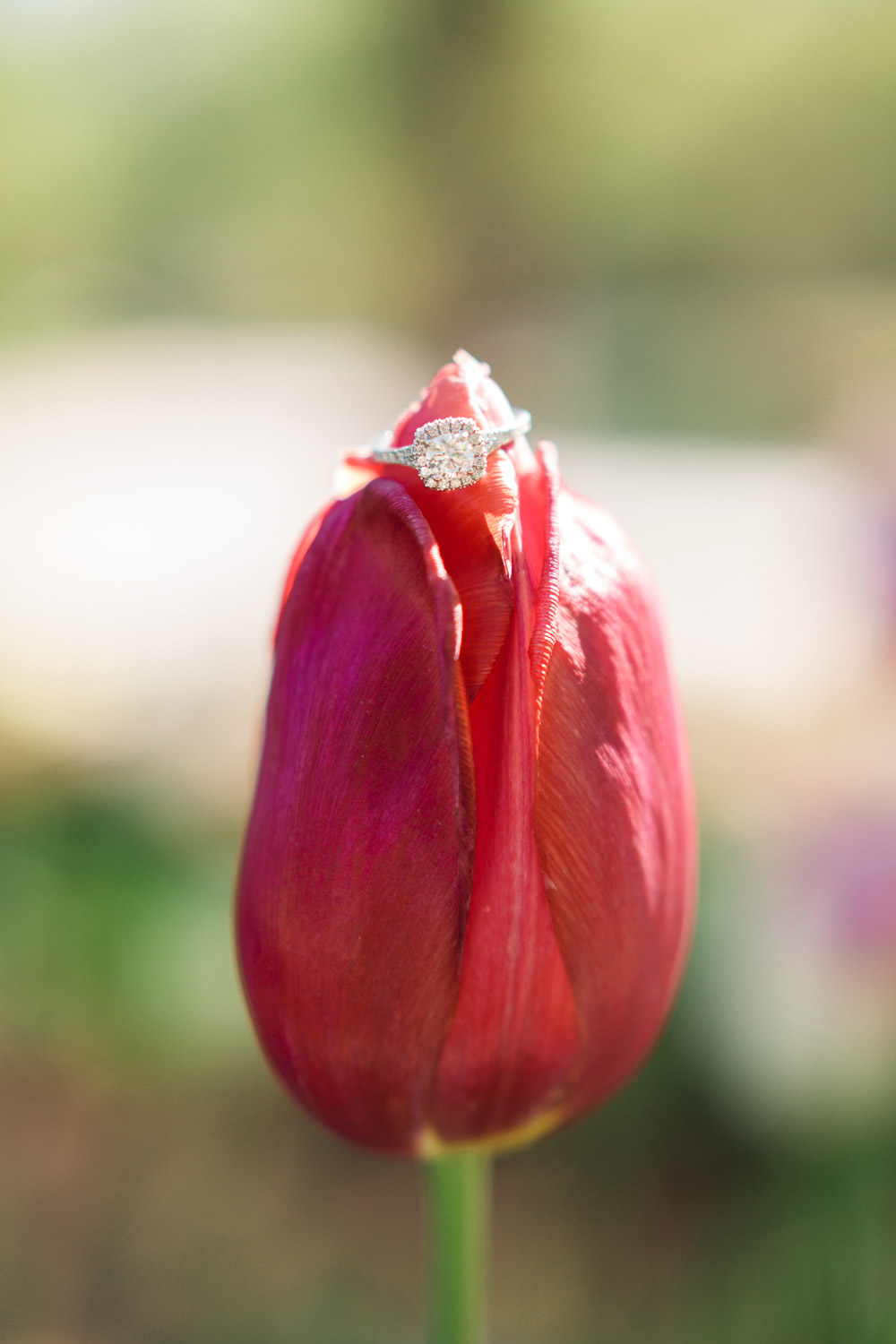 diamond engagement ring on a pink tulip