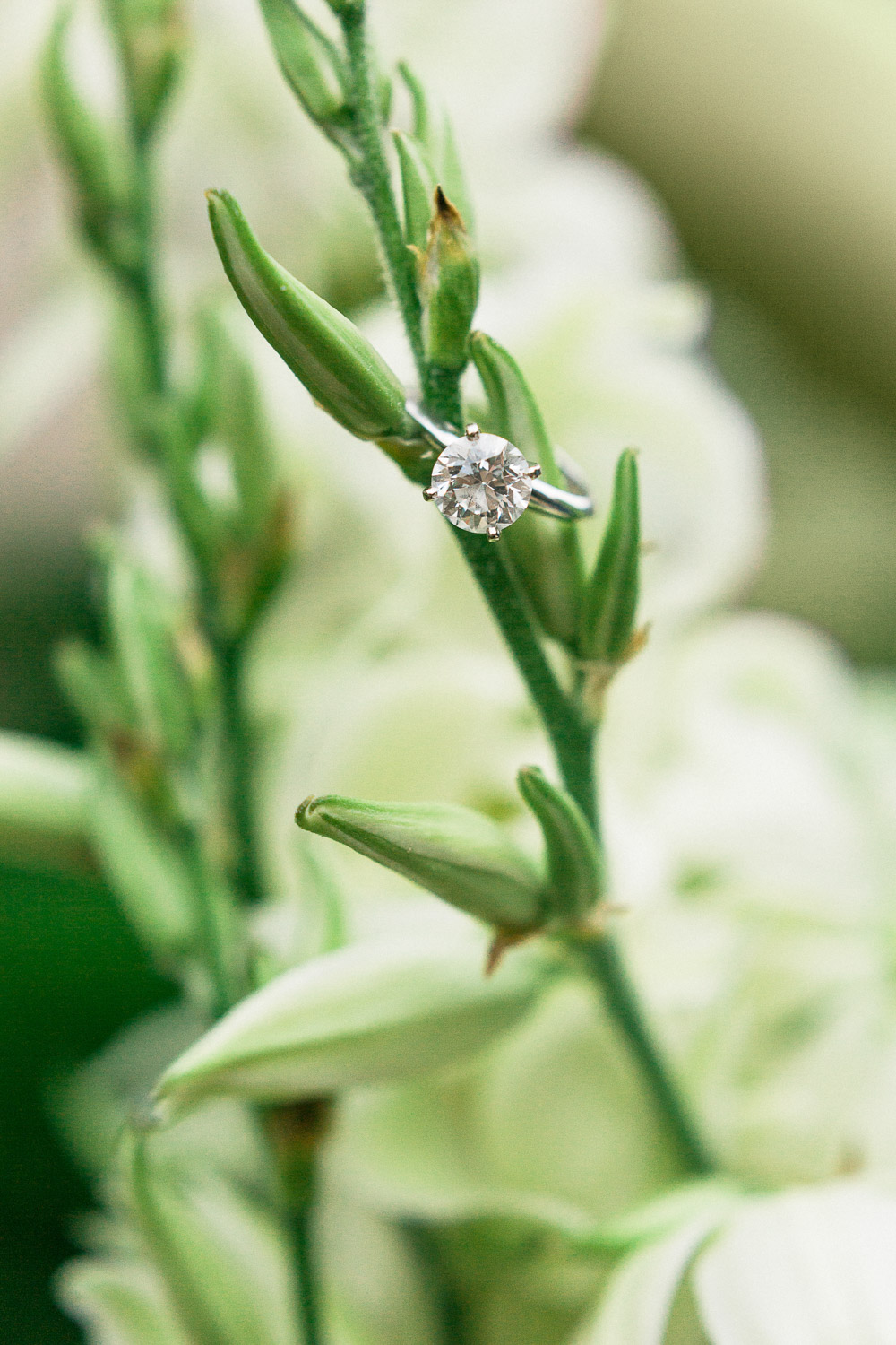 engagement ring on a yucca plant bloom