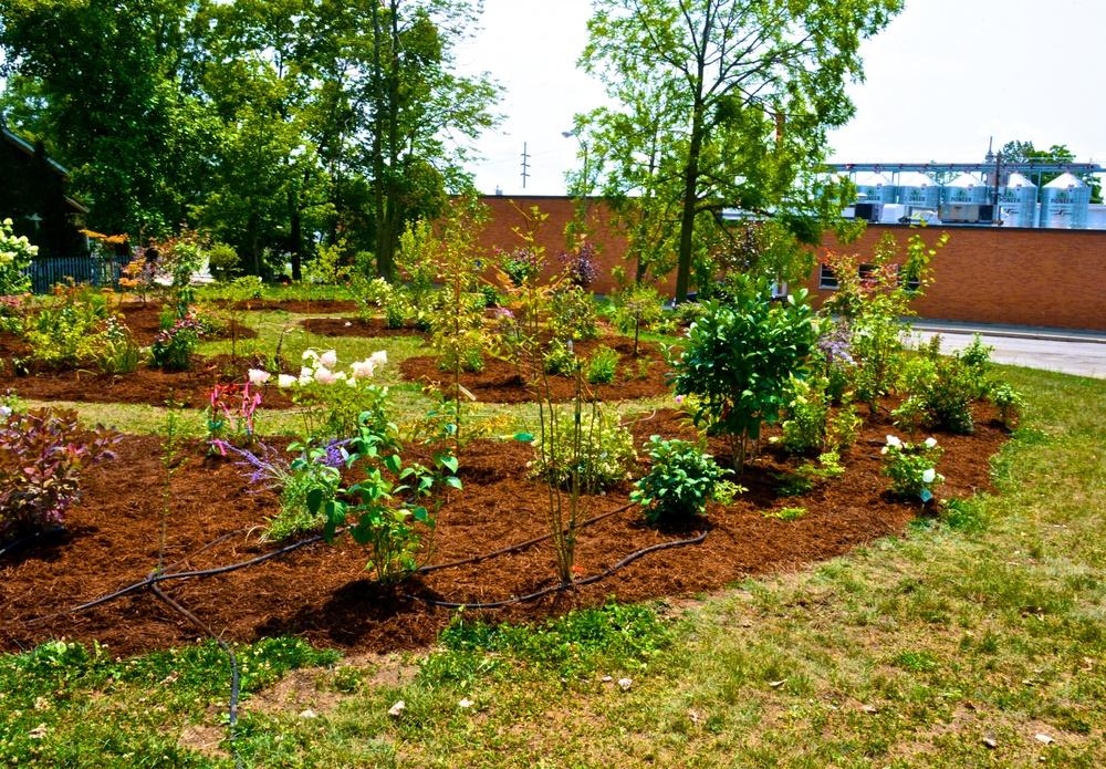 2014-08-02  Gardens 8 2 2014 (22).jpg