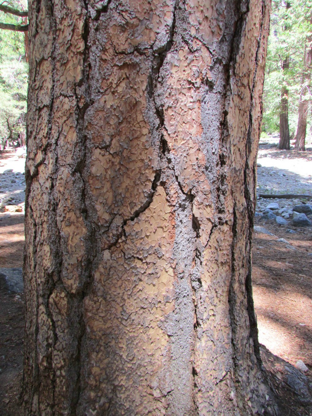 Keila does Yosemite 7