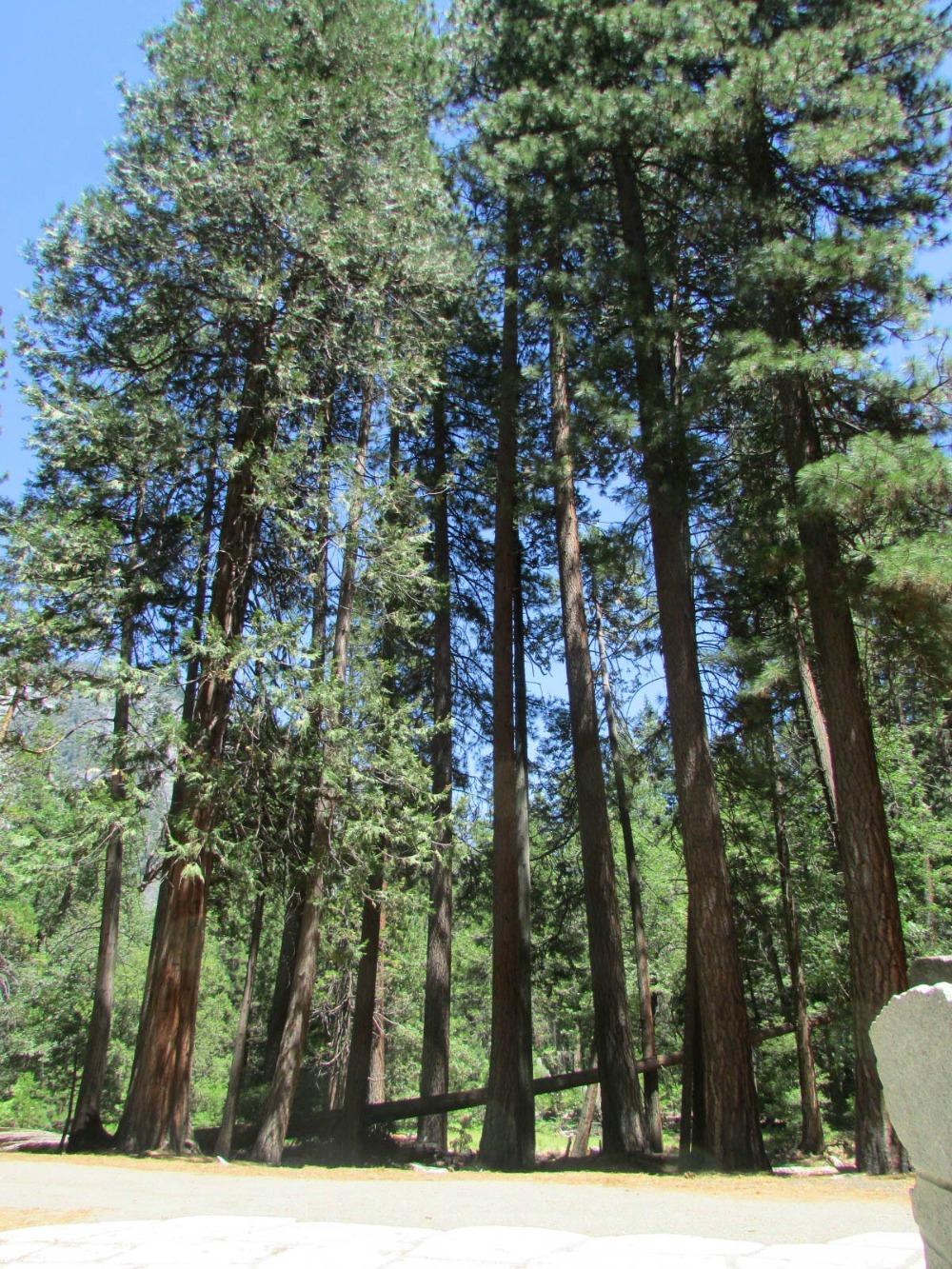 Keila does Yosemite 9