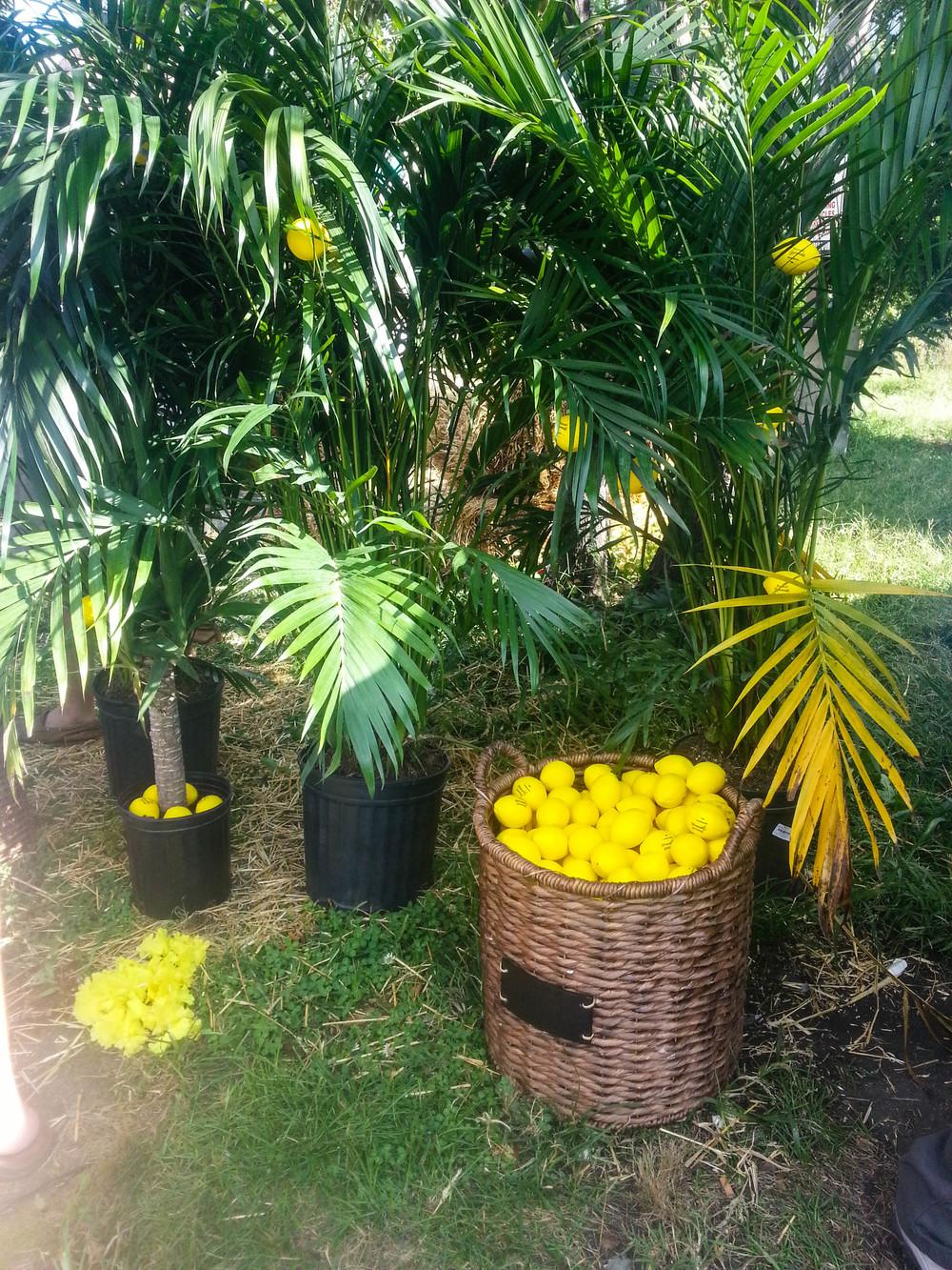 Lemon exhibit via Honest Tea