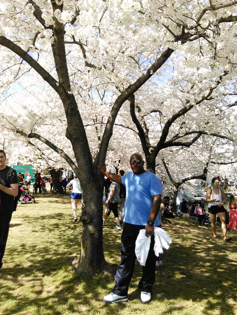 Daddy Cherry Blossoms