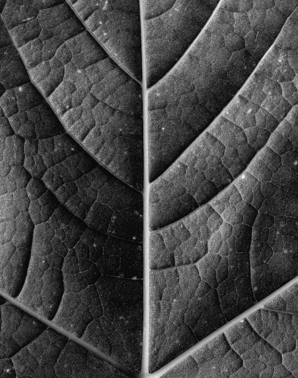 texturas-oleiros--48.jpg