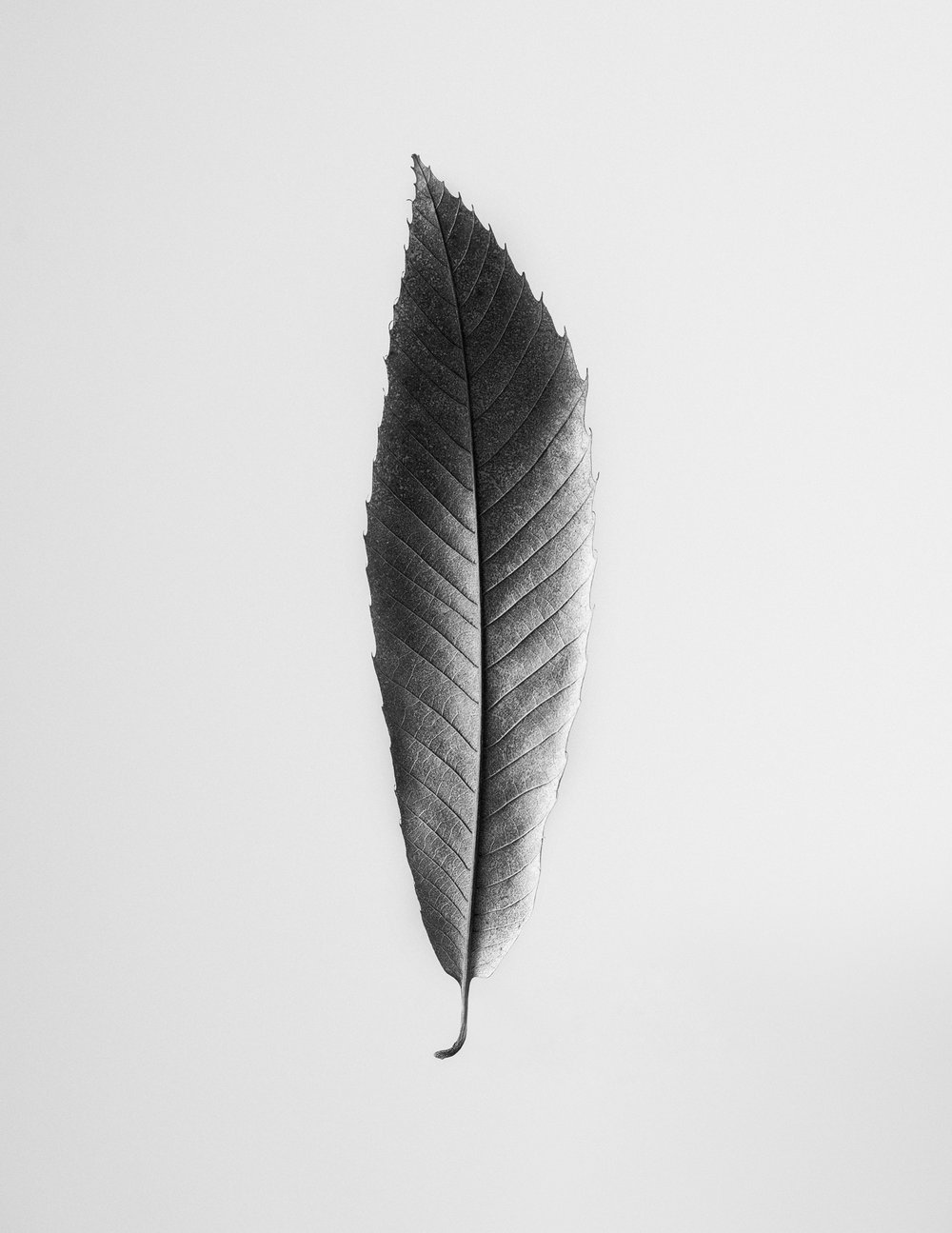 texturas-oleiros-1.jpg