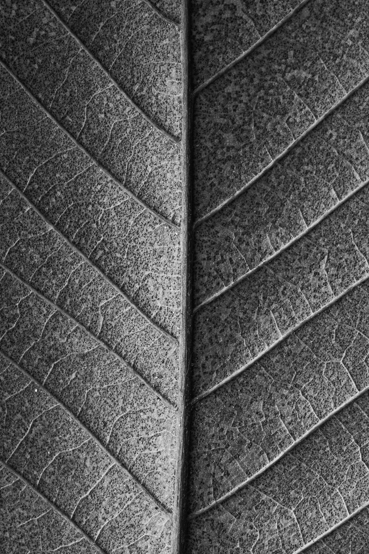 texturas-oleiros-2.jpg