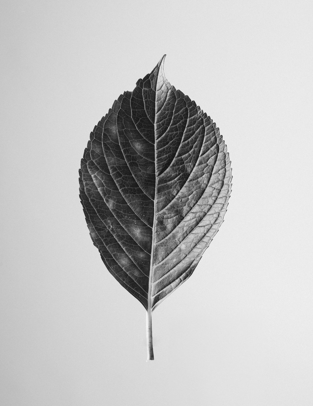texturas-oleiros-5.jpg
