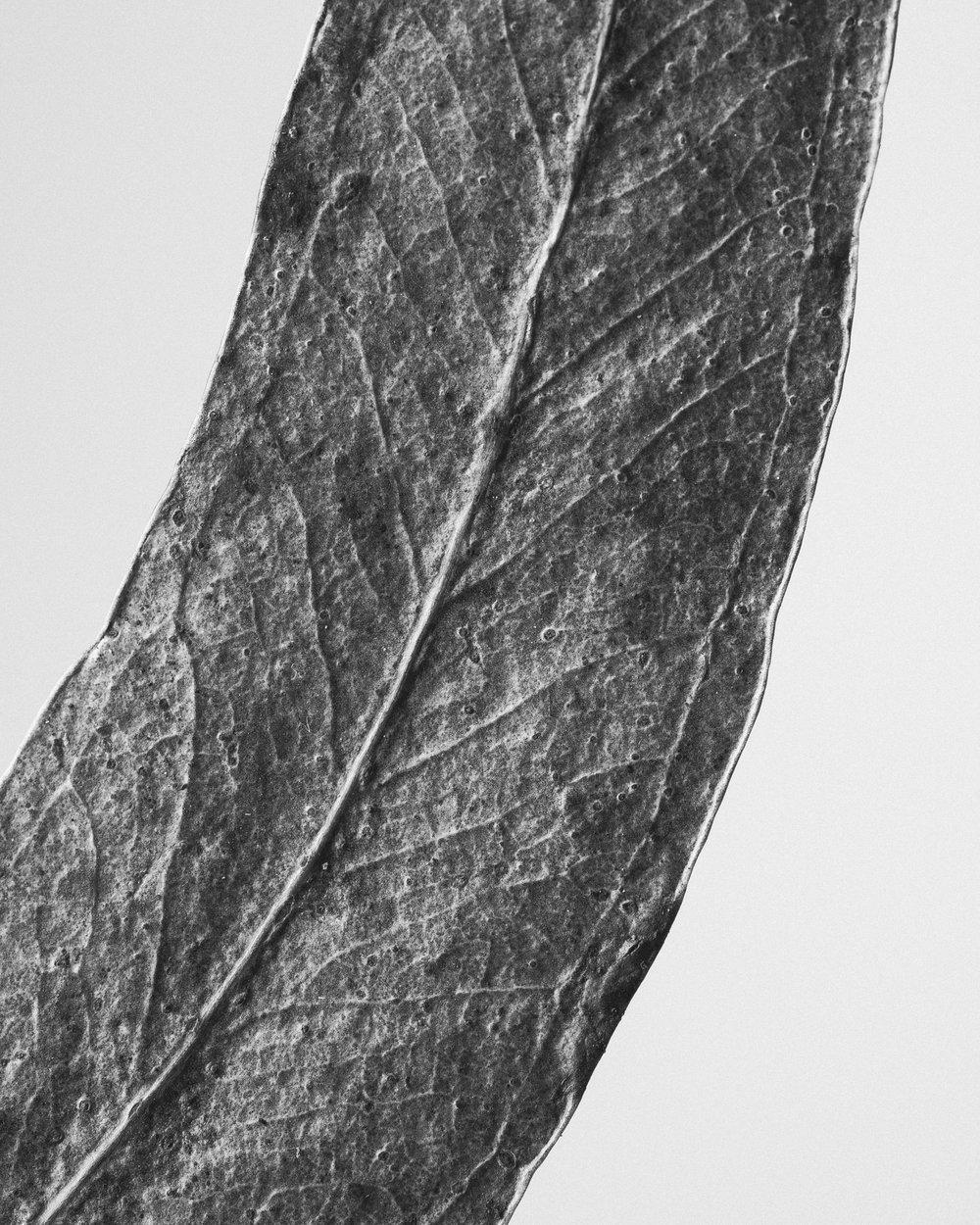 texturas-oleiros-12.jpg
