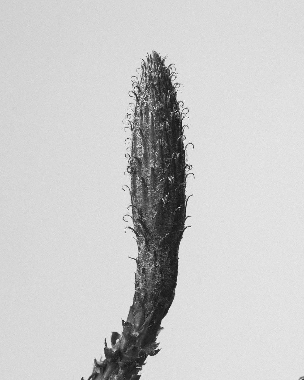 texturas-oleiros-15.jpg