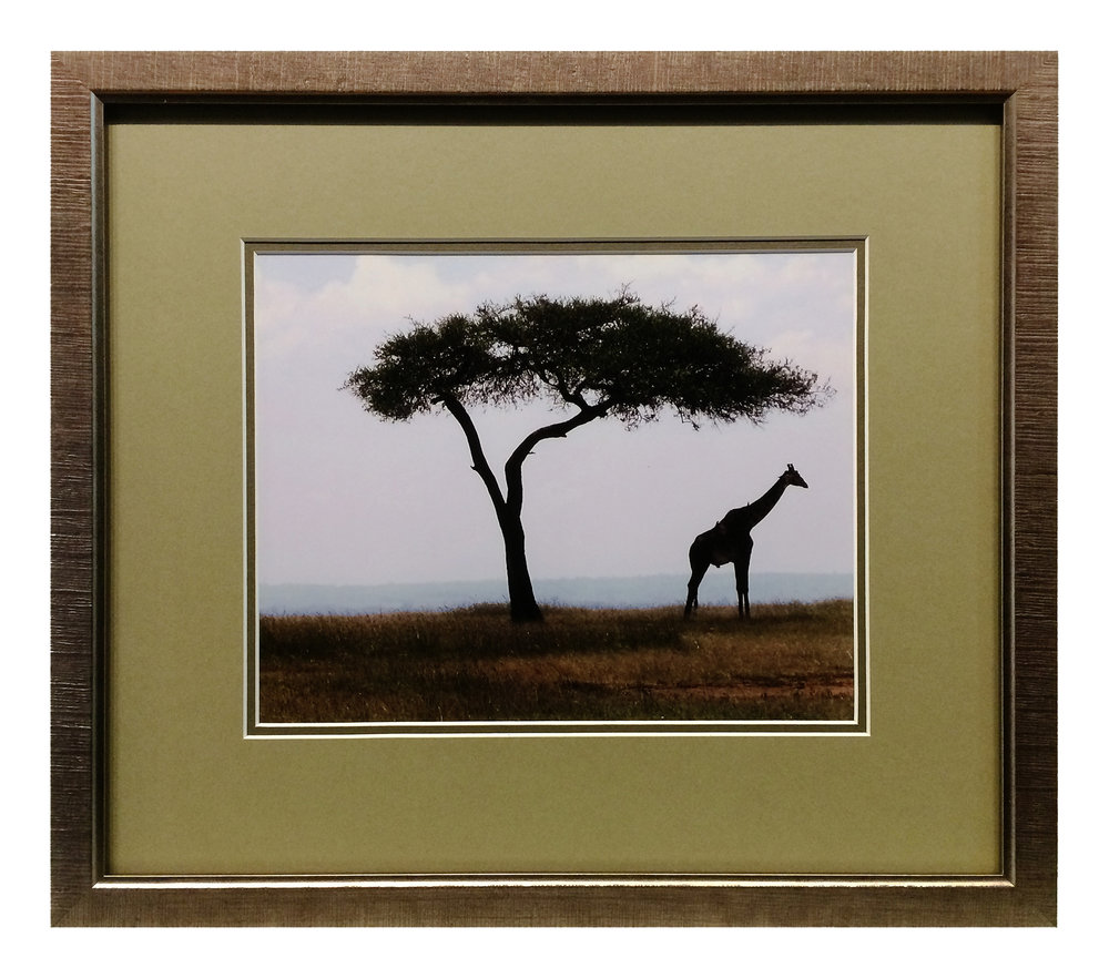 Giraffe _ Tree Photograph1670.jpg