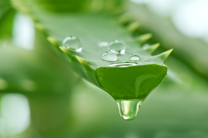 http://health.homexgarden.com/benefits-aloe-vera-juice-weight-loss/