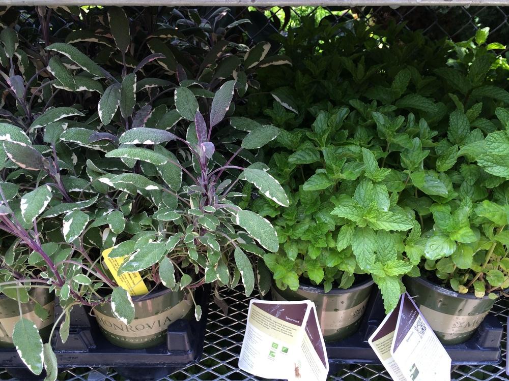 ... Outdoor Plants Natty Garden ...