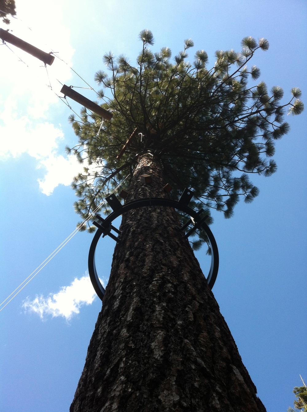 Environmentally friendly tree ring