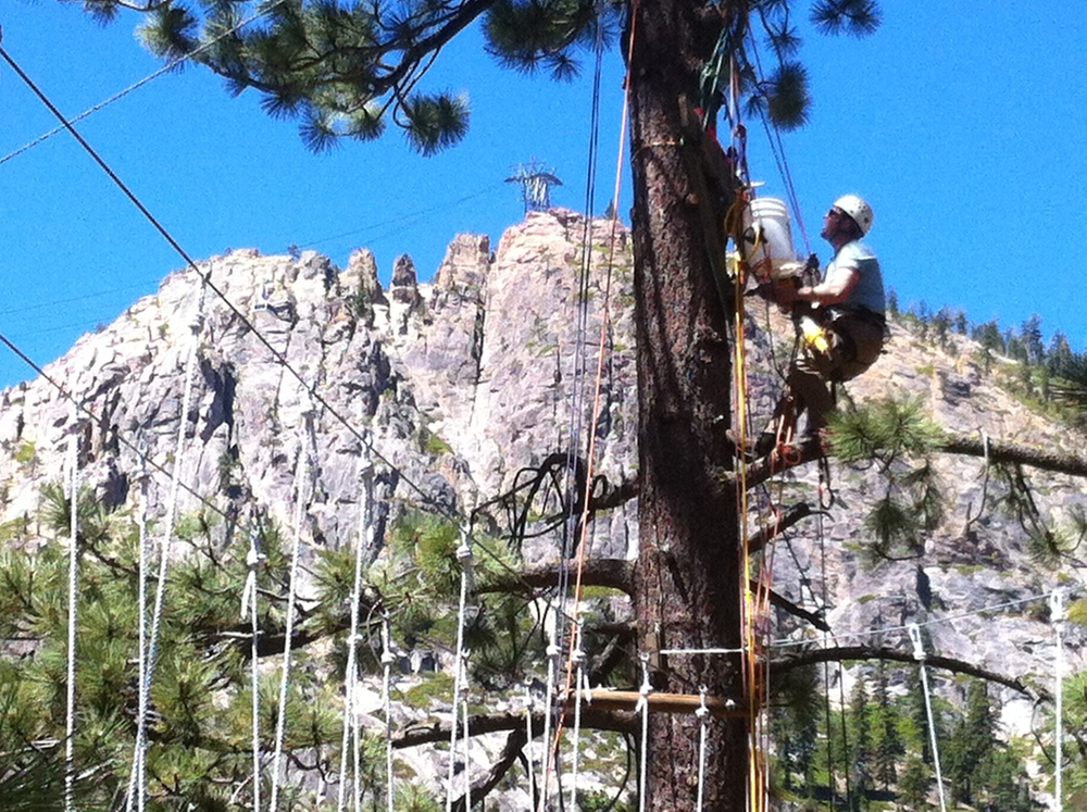 Installing the high course Squaw Valley Ropes Course