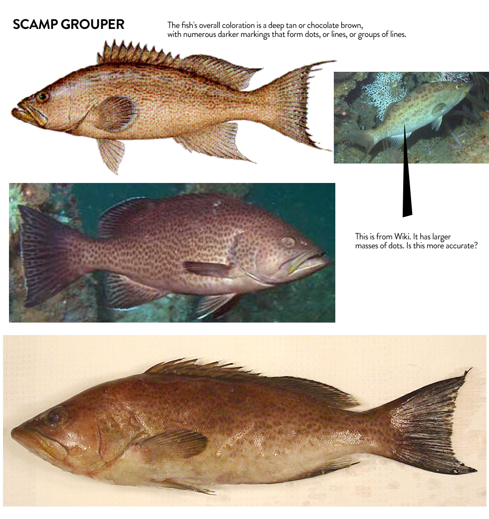 Can you please confirm the color of Scamp grouper (deep tan or chocolate brown) and the pattern for dots (large mass of dots or dots all over) Scamp grouper is a light grey/brown with yellowing around the mouth. This pics show their dotted pattern pretty well—http://www.fishbase.org/Photos/PicturesSummary.php?resultPage=1&ID=1213&what=species