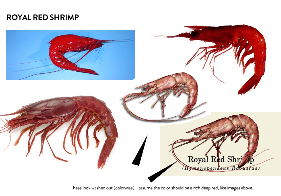 Royal red shrimp – should the color be washed out or should it be the rich deep red I would say more washed out than solid deep red—sort of a translucent red if that makes sense—http://www.photolib.noaa.gov/htmls/fish4553.htmandhttp://www.photolib.noaa.gov/htmls/expl8146.htm. See attached as well.