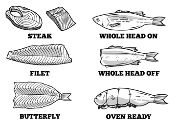 Fish Line Art_FINAL_Vector file