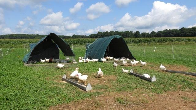 FarmEats pasture raised chicken