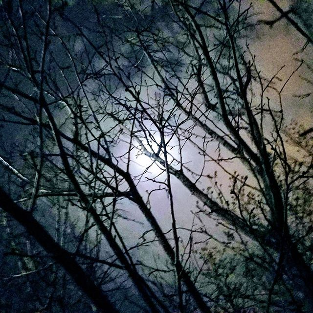 Sometimes you gotta lay down on the grass and just relax and contemplate. Beautiful Las Vegas night sky in December. #nature #beauty #sky #moonlight #winter #christmastime #lasvegas