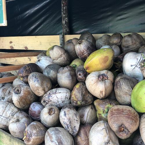 dos vizinhos - os cocos vem da comunidade, num raio de 20kmnehum usa agrotóxicos