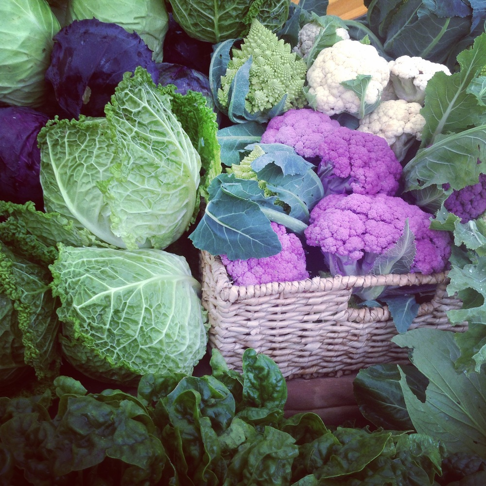 the always gorgeous vegetables from Rabbit Fields Farm