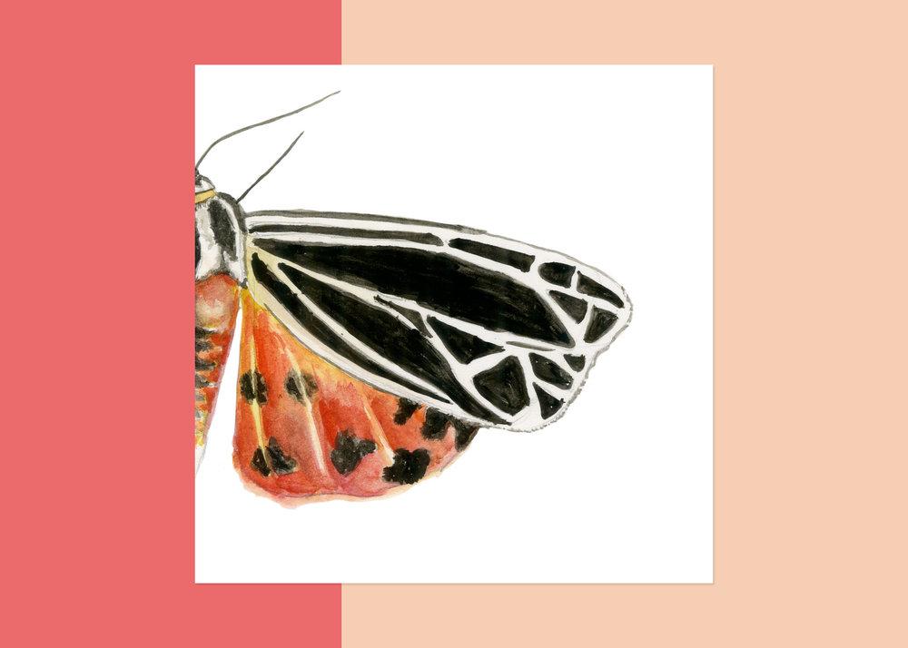 4 X 4 moth #1 $40