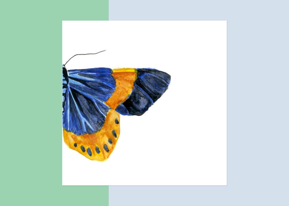 4 x 4 moth #2 $40
