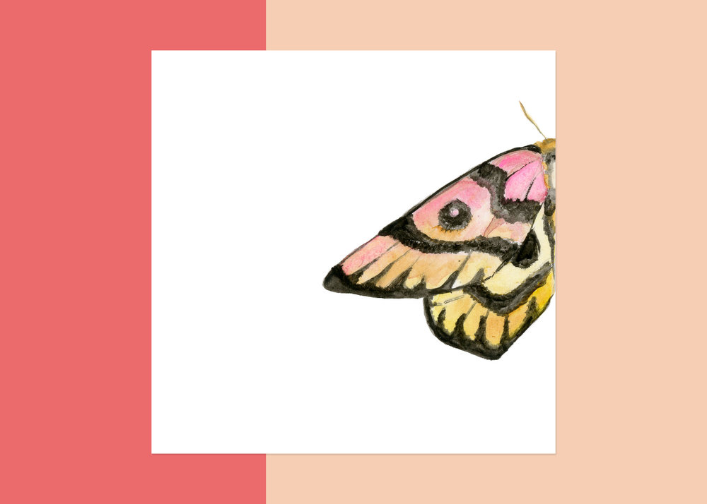 4 x 4 moth #3 $40