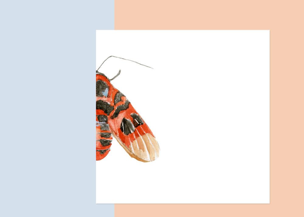 4 x 4 moth #4 $40