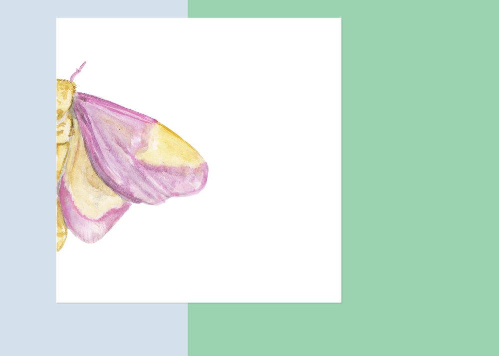 4 x 4 moth #5 $40