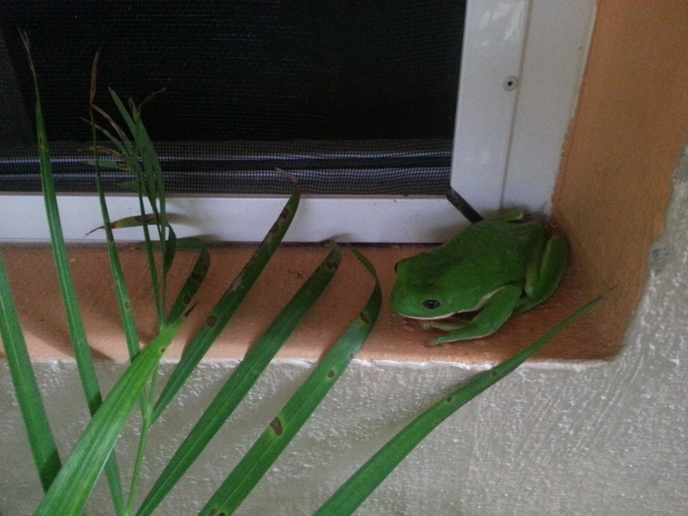 A guest at the hotel is going green