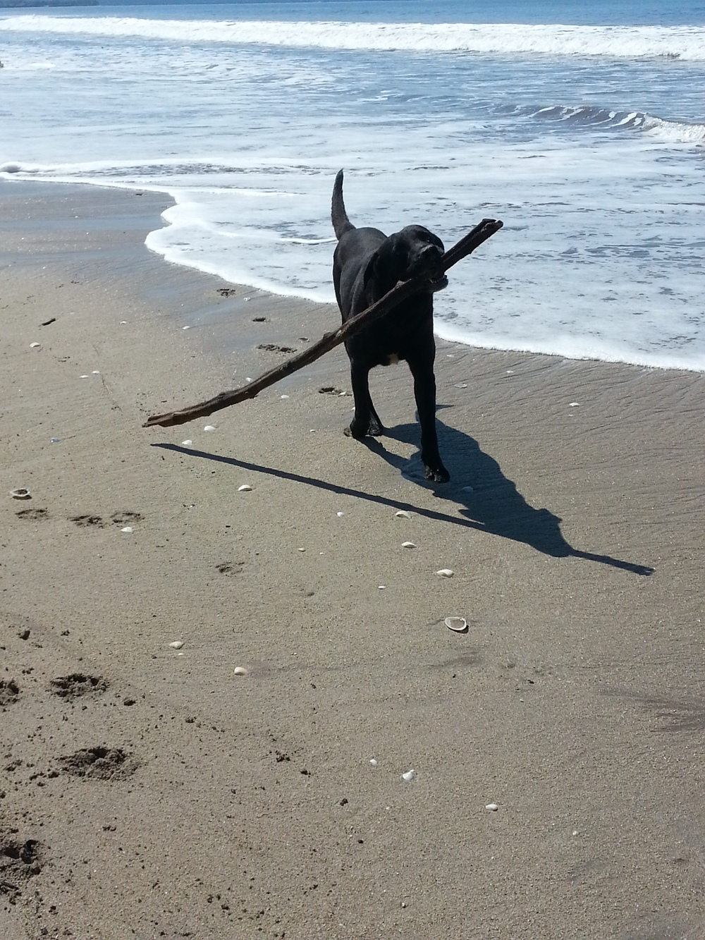 3 legged dog...very fast