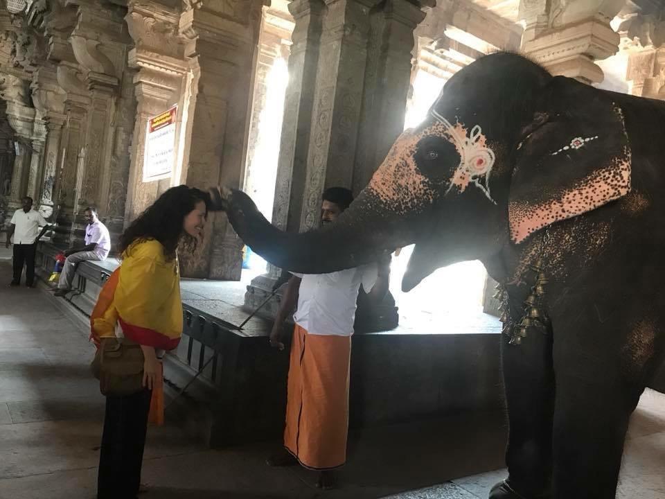 Temple Elephant.jpg