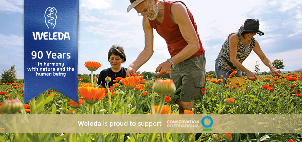 weleda sustainability
