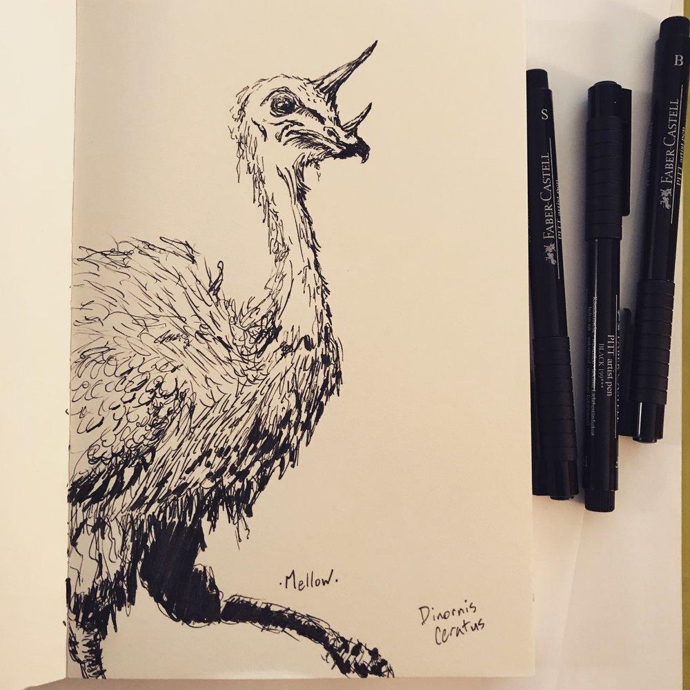 Dinornis ceratus.