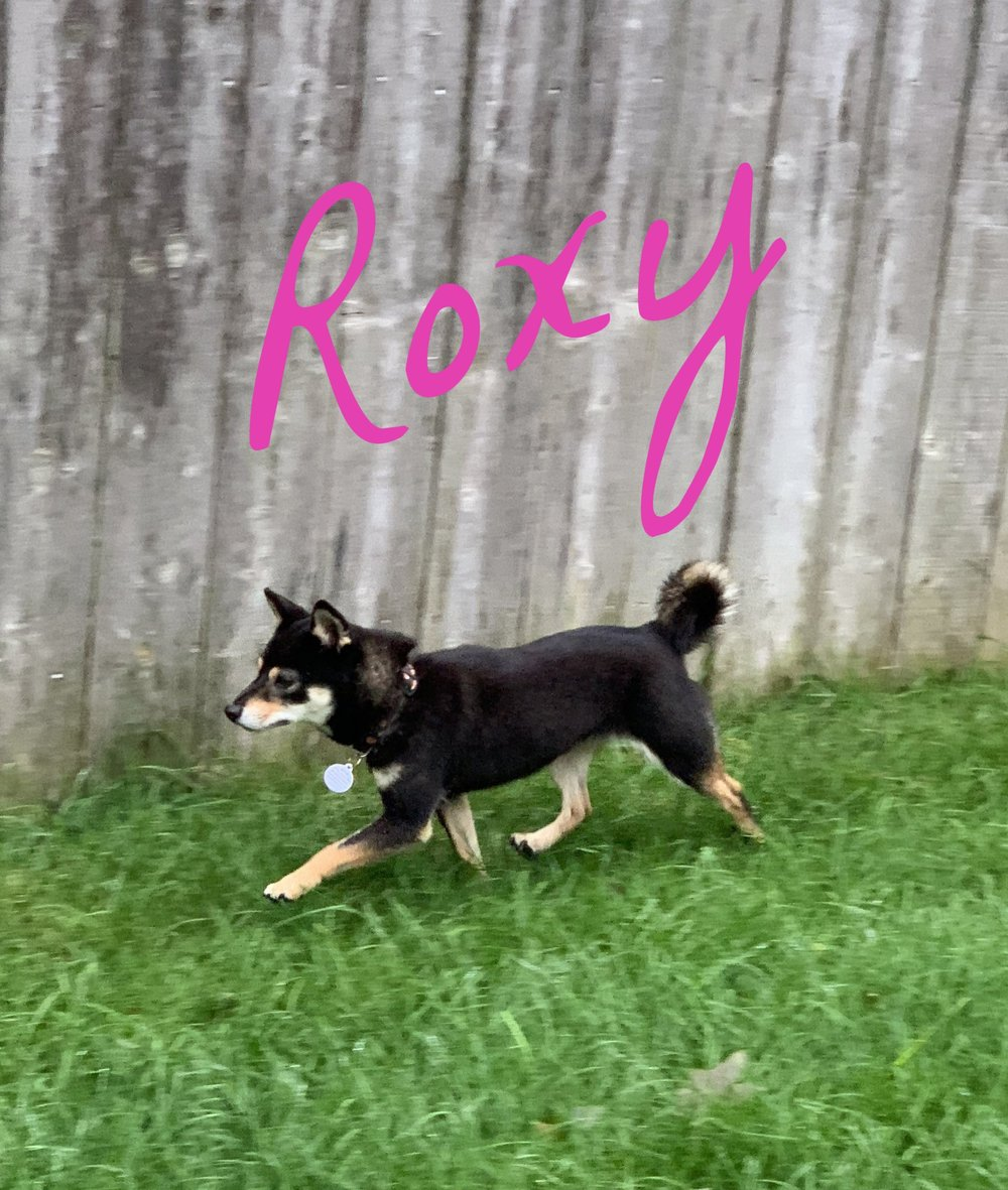 roxy1.jpeg