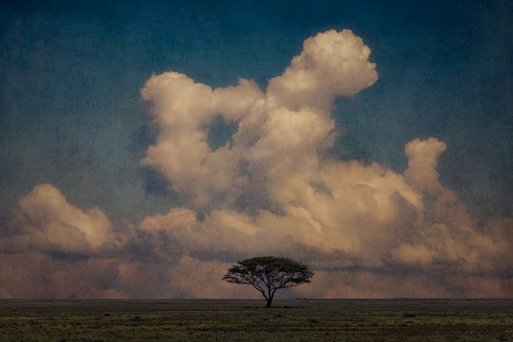 Acacia Tree and Clouds.jpg