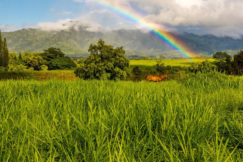 Poipu Rainbow Rainbow Horse L46A5892-12x18-2.jpg