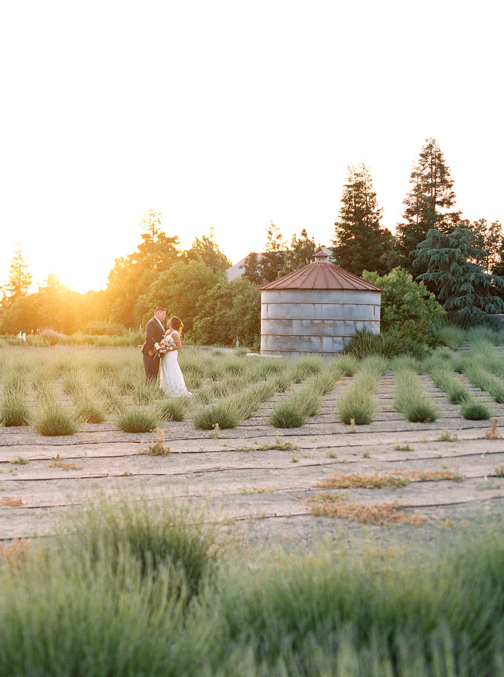 pageo-lavender-farm-wedding-turlock-california-34.jpg