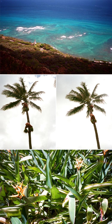 Oahu-5.jpg