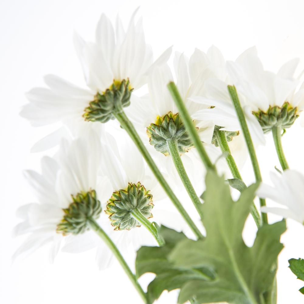 Flowers Test Shoot